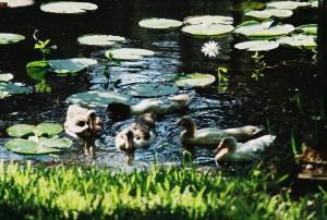 The Original Quack Pack