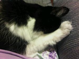 belle sleeping